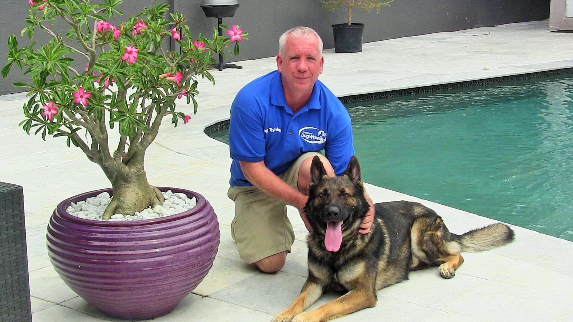 richard heinz, the miami dog whisperer, master dog trainer, obedience training, expert dog trainer, miami dog trainer, doral dog trainer, coral gables dog trainer, obedience, positive results dog training