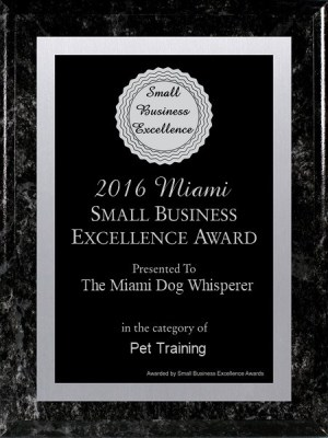 Richard Heinz, Miami Dog Whisperer, Dog trainer, dog behaviorist, dog trainer in miami, miami dog training, doral dog training, dog training expert, best dog trainer, aggression trainer, famous dog trainer, dog whisperer, protection K9 training, protection dog training, family protection dog, personal protection dog, german shepherd, dog training in miami, dog trainer in miami, doral dog trainer, coral gables dog trainer, miami beach dog trainer, dog trianer to the stars, positive dog training, obedience dog training, free evaluation, dog trainer, miami dog whisperer, dog force 1, dog training videos, dog training online, aggressive dog training, remote collar training, positive dog training, electric collar dog training, miami dog training, doral dog training, coral gables dog training, pinecrest dog training, obedience training, potty training, puppy training, affordable dog training, dog training in my area, trained dogs for sale, trained golden retrievers, fully trained puppies, trained dogs, trained german shepherd, dog training videos, online dog training videos, best dog trainer, best trained dogs for sale, trained service dogs, service dogs for sale, service dog training, service dog certification, trained companion dog, trained guard dog, trained protection dog, Richard Heinz dog training, The Miami Dog Whisperer, Trained dogs for Sale
