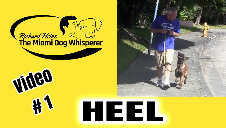 dog training in miami that is fast and easy  Positive dog